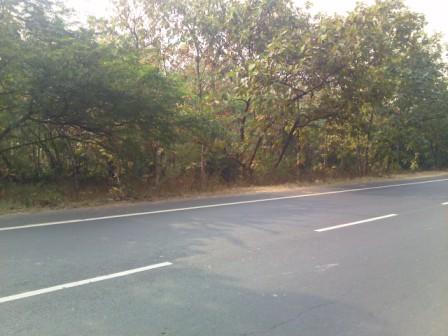 રસ્તા માં આવતા જંગલ